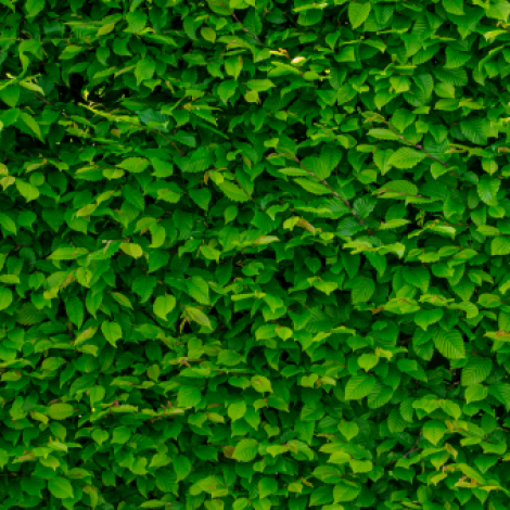 very bright photo of a bush with green leaves