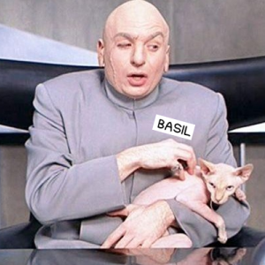 "screenshot of dr. evil from austin powers holding his hairless cat in his lap. the text ""basil"" is prevalent on his chest like a nametag"